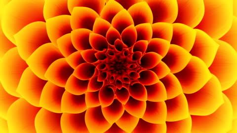 vídeos de stock e filmes b-roll de abertura da flor amarela. com laço. - florescer