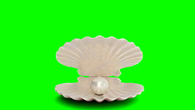Opens and closes pearl inside sea shell isolated on a green background. Jewelry pearl beads. Brilliant oyster pearl ball for luxury accessories. Brilliant sea pearl. Looping 3D 4K animation