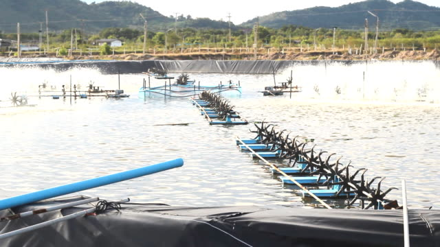 Or oxygen into water shrimp farms video