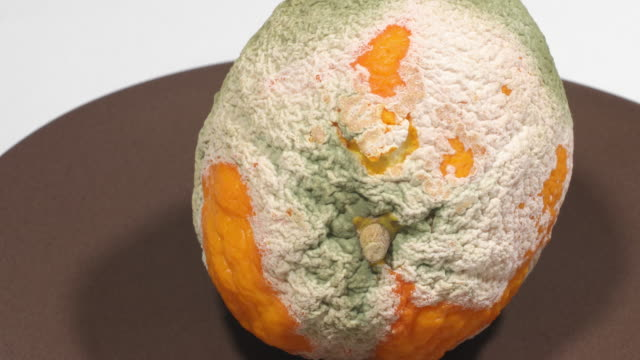 Orange attacked by fungi - time lapse