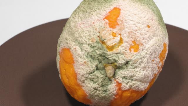 orange von pilzen angegriffen - zeitraffer - verfault stock-videos und b-roll-filmmaterial