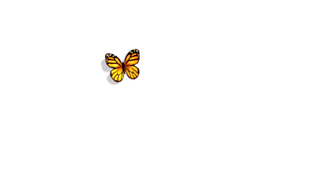 orange butterfly flying on a blue background - butterfly stock videos and b-roll footage