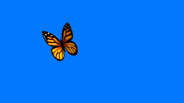 Orange Butterfly Flying on a Blue Background
