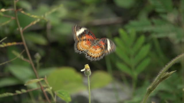 Orange Butterfly On Small Flower Super Slow Motion
