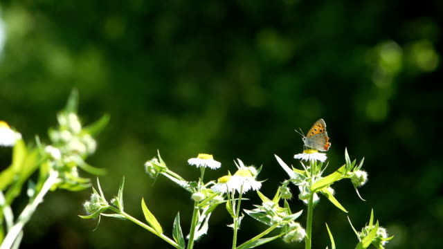 Orange Butterfly or Leopard Lacewing Butterfly on flower and flying out of flowers in flower garden in morning