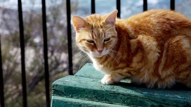太陽の下でベンチに座ってオレンジ色の猫 - ベンチ点の映像素材/bロール
