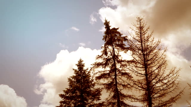 Orange Dusk Cinematic Timelapse of Clouds over Coniferous forest video