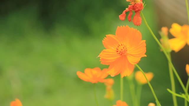 Orange flower blowing in breeze video