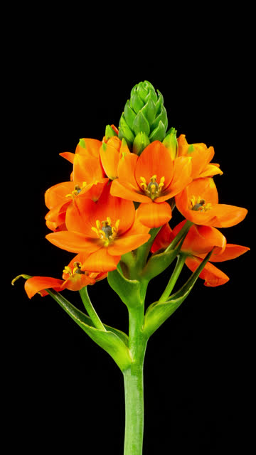 orange flower time lapse - vertical format video stock videos and b-roll footage