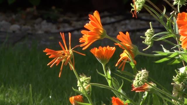 Orange flowers in the sun