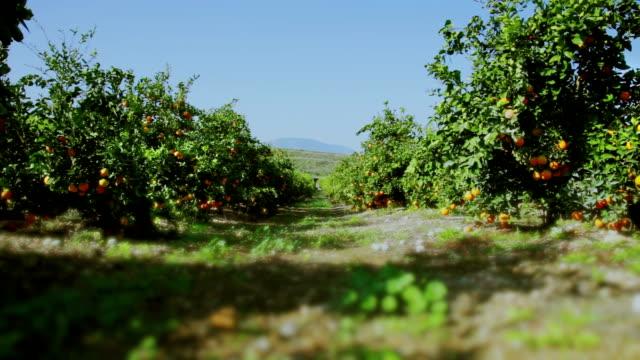 Orange garden on summer day video
