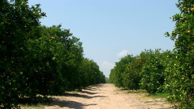 Orange grove video