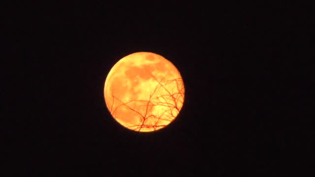 Orange moon and branches timelapse video