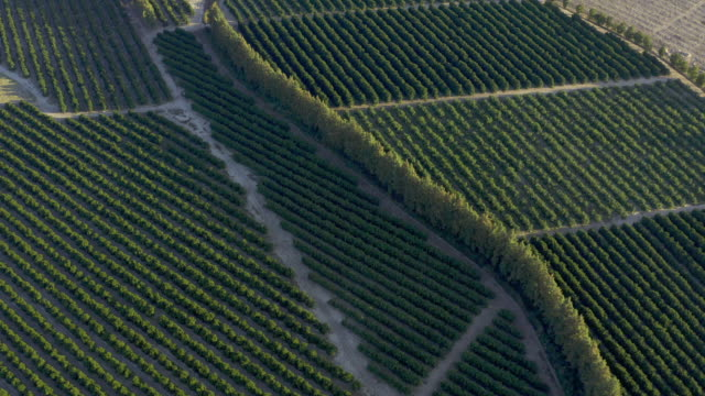 Orange picking season is here 4k drone footage of crops growing on a farm western cape province stock videos & royalty-free footage