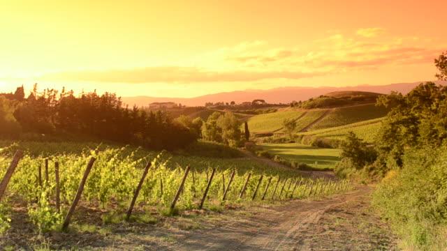 Orange vineyard at sunset