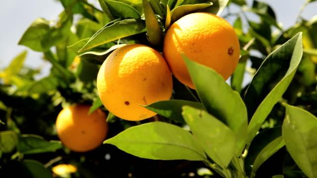 oranges - apelsin bildbanksvideor och videomaterial från bakom kulisserna