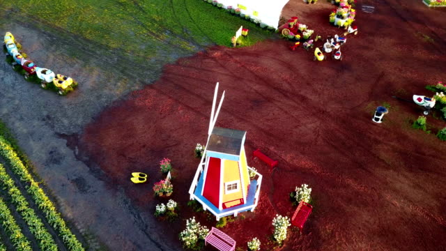 Orbit view of windmill in tulip farm at sunrise hour video