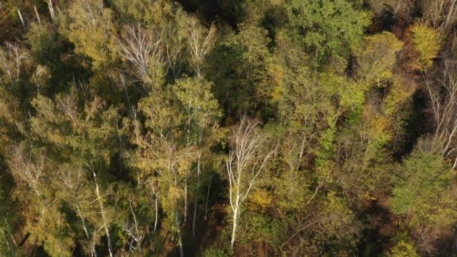 orbital aerial drone video around autumn trees in the park - молдавия стоковые видео и кадры b-roll