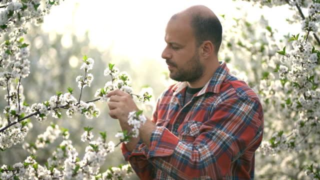 Orchardman video