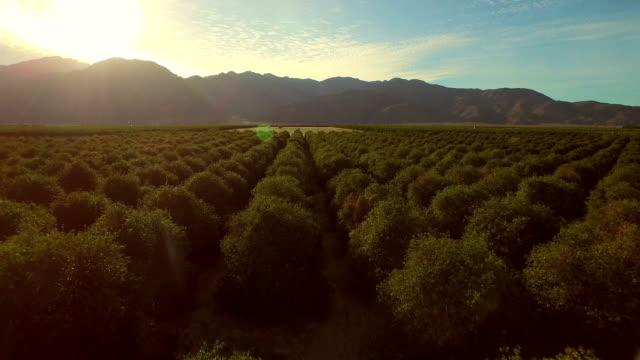 orchards aerial - fruktträdgård bildbanksvideor och videomaterial från bakom kulisserna