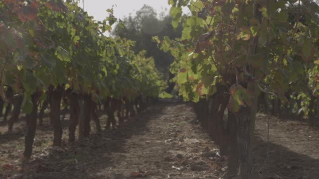 vídeos de stock e filmes b-roll de orchards - romã