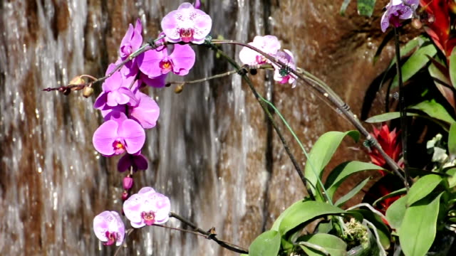 Orchid and waterfall video
