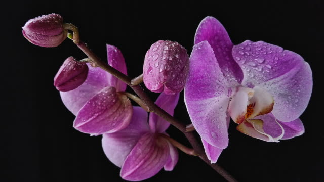 orchid bloom in motion