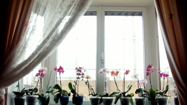 stockvideo's en b-roll-footage met orchideebloemen op een vensterbank - ornaat