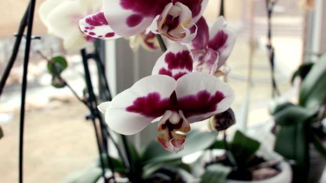 Orchid flowers on a window sill