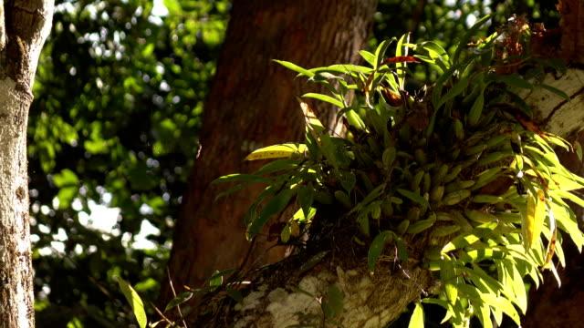 orchidee auf ast baum - orchidee stock-videos und b-roll-filmmaterial