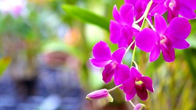 orchid - orchidee stock-videos und b-roll-filmmaterial
