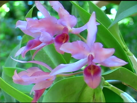 Orchids 1 video