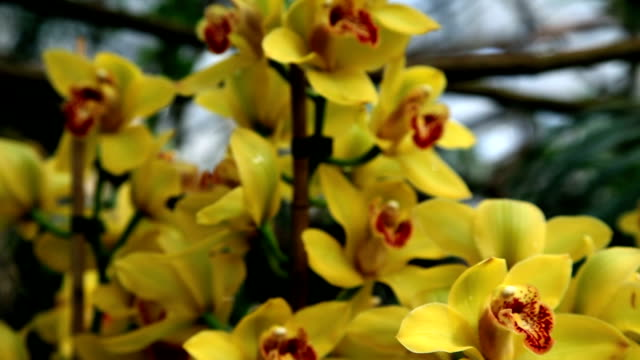 HD CLOSE UP: Orchid's blossom