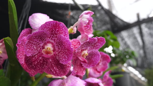 Orchids in the garden