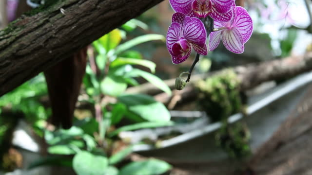 HD CLOSE UP: Orchids video