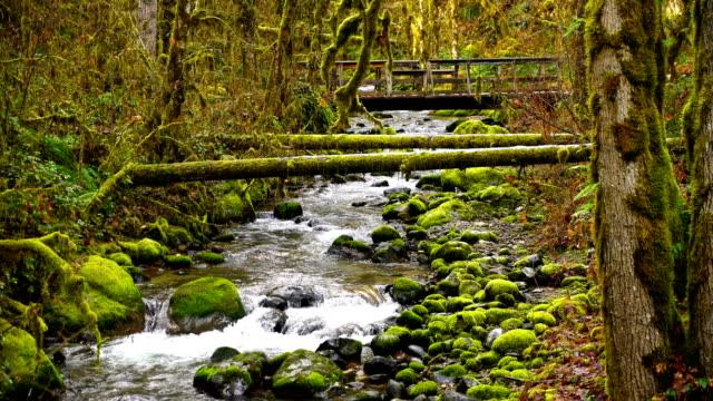 oregon deep forest footbridge mossy rock river flow - ручей стоковые видео и кадры b-roll