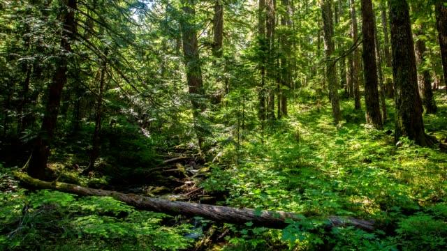орегон пышные леса - куст стоковые видео и кадры b-roll