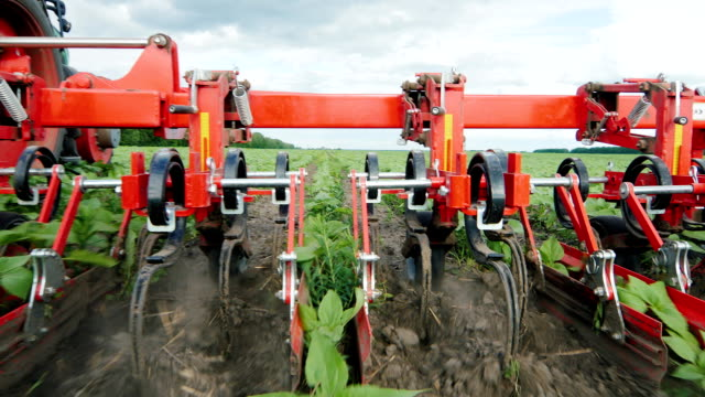 Organic agriculture. Tractor plow removes weeds from smooth sunflower sprouts Organic agriculture. Tractor plow removes weeds from smooth sunflower sprouts. Steadicam shot weeding stock videos & royalty-free footage