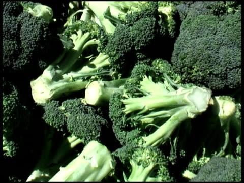 organic broccoli aste - crucifere brassicali video stock e b–roll