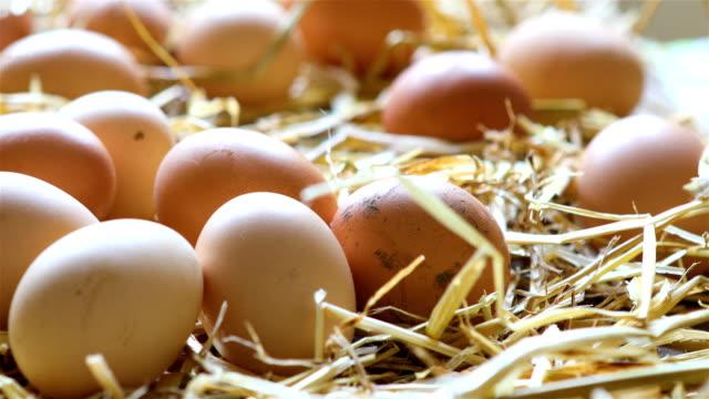 organic chicken eggs in the hay - paglia video stock e b–roll