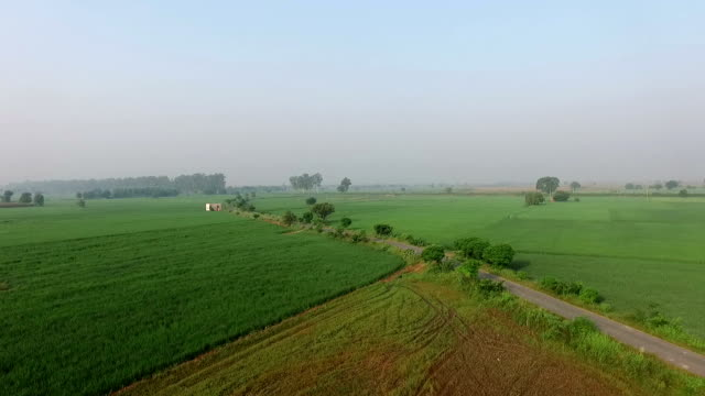 organic farm elevated view - haryana video stock e b–roll