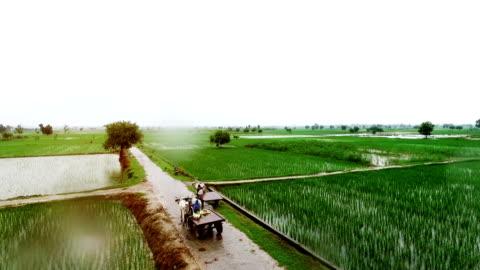 vídeos de stock e filmes b-roll de organic farm in rainy season - aldeia