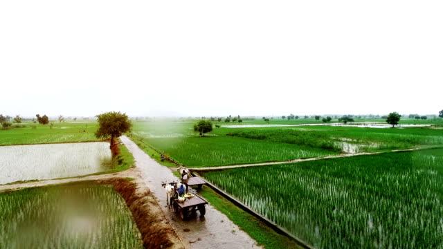 yağışlı sezon içinde organik tarım - hindistan stok videoları ve detay görüntü çekimi