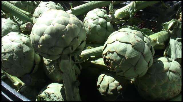 (HD1080i) Organic Globe Artichoke Buds video