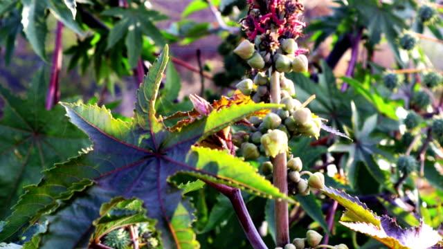 Organic herb plant swaying through wind