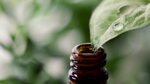 organiska växtbaserade väsen. färskt vatten droppande från blad till eterisk olja flaska - eucalyptus leaves bildbanksvideor och videomaterial från bakom kulisserna