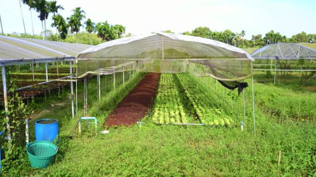 bio gemüse hydrokultur farm. - gewächshäuser stock-videos und b-roll-filmmaterial