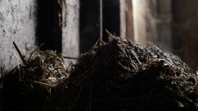 Organic mixture of animal feces and bedding straw  video