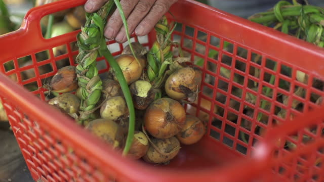 SLOW MOTION: Organic Onions Farmer sorting his onions in a basket 笹 stock videos & royalty-free footage