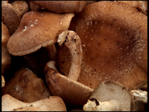 Organic Shiitake / Chinese Black Forest Mushrooms video